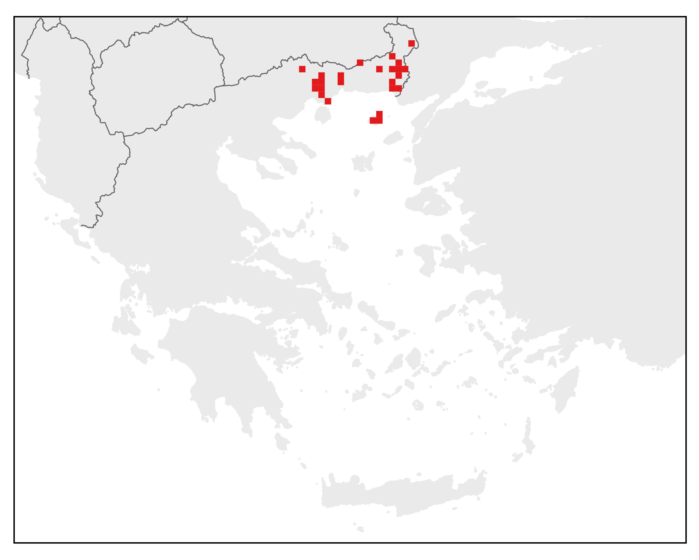 Ανατολικός Λισσοτρίτωνας